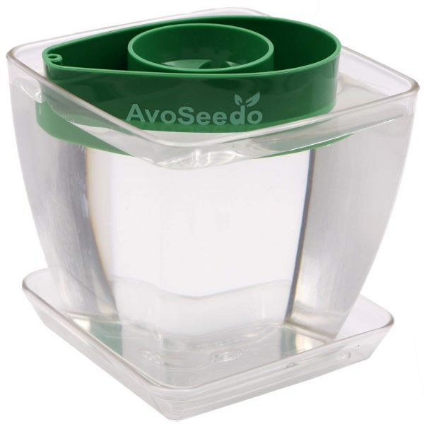 Avocado Growing Kit 6