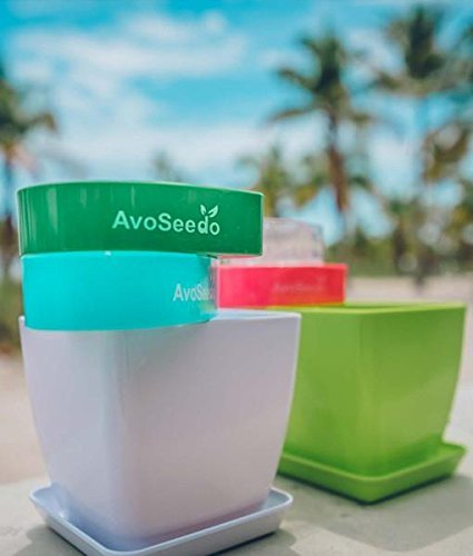 Avocado Growing Kit 9